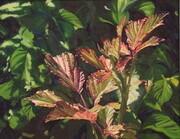 Bramble Leaves/Rovo Communale - Amalfi
