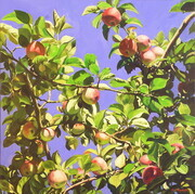 Apples in August