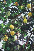 Lemon Tree - Amalfi